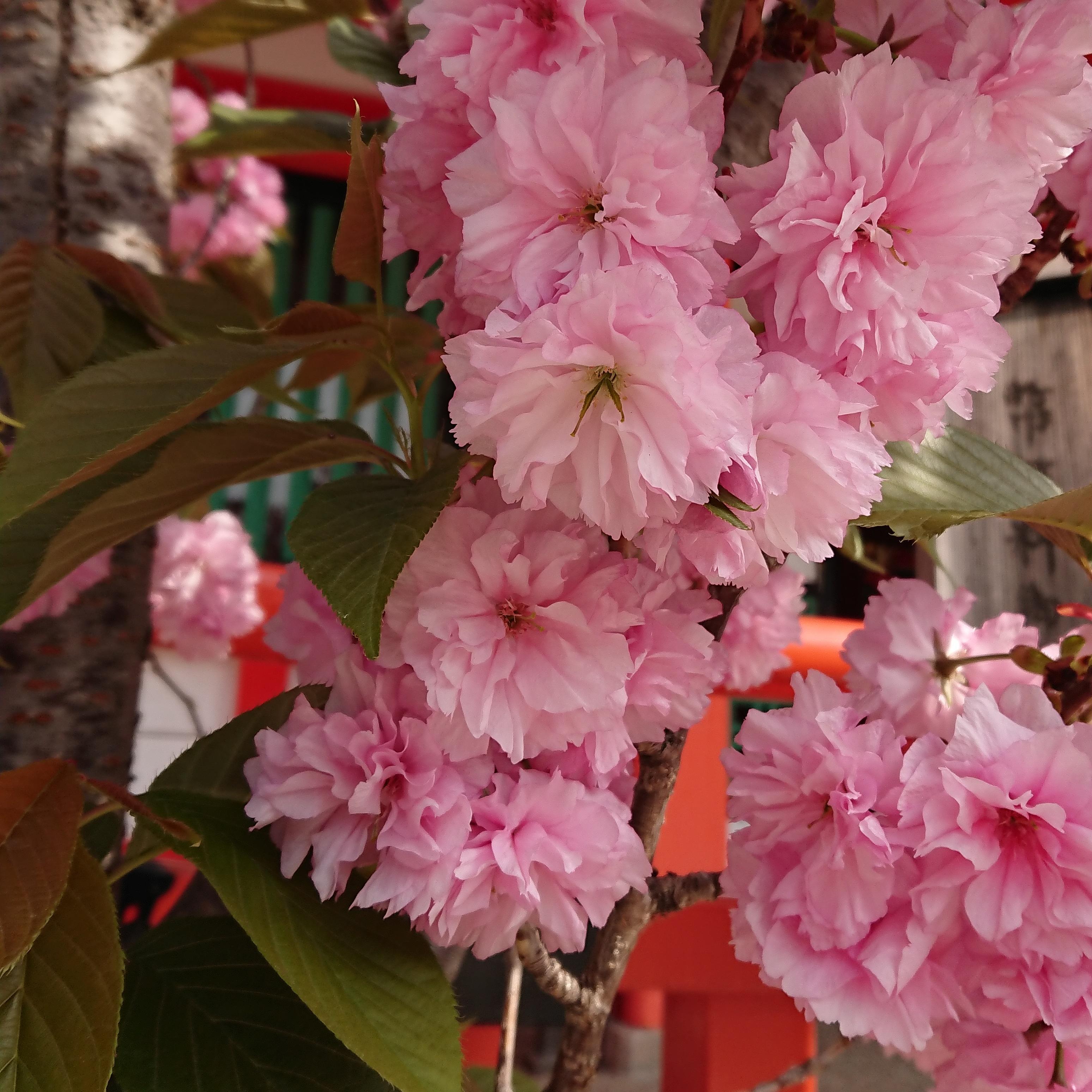 生田神社の自然
