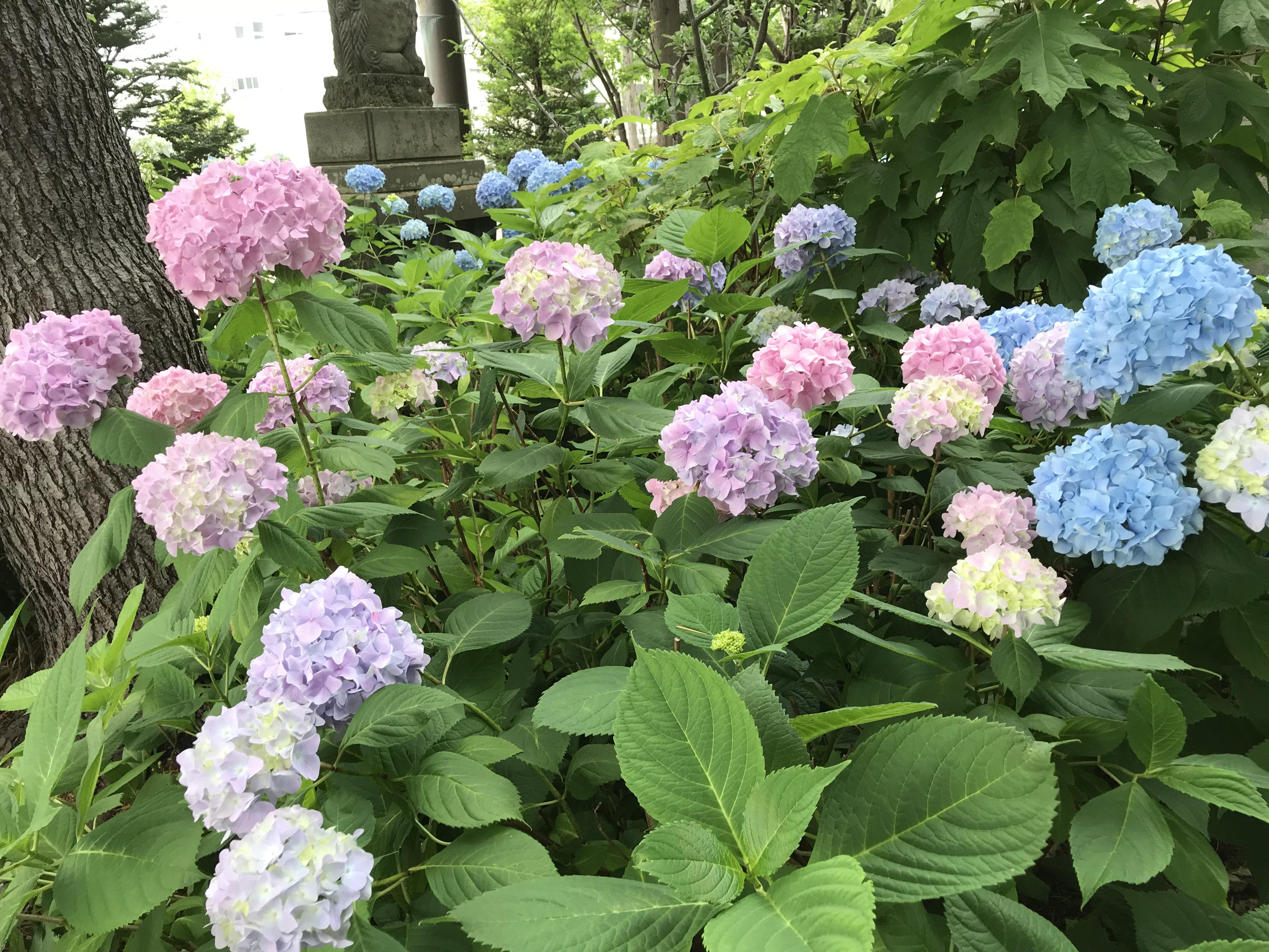 西野神社の庭園