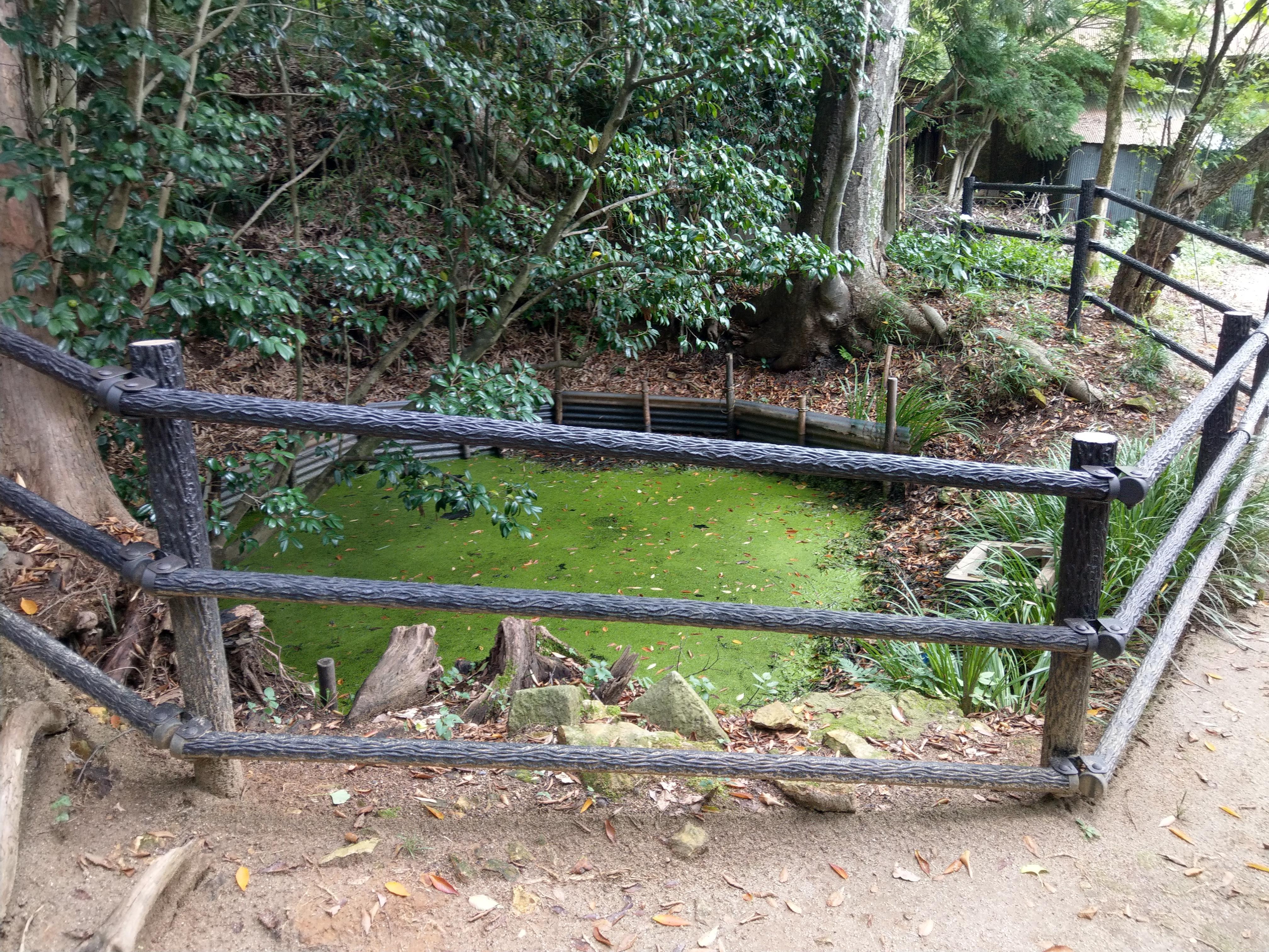 西坂ねこ稲荷神社の庭園