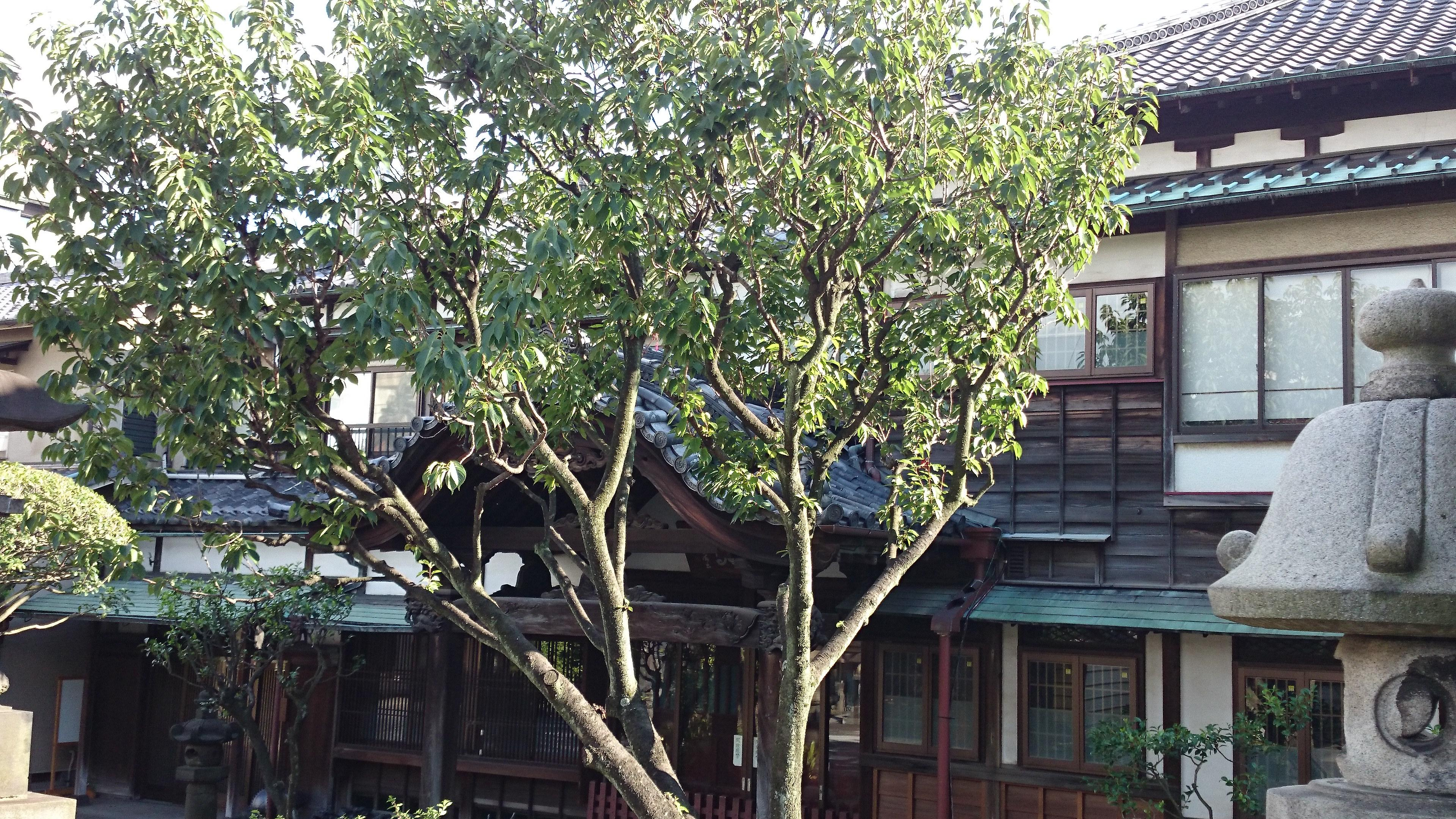 弘福寺の建物その他