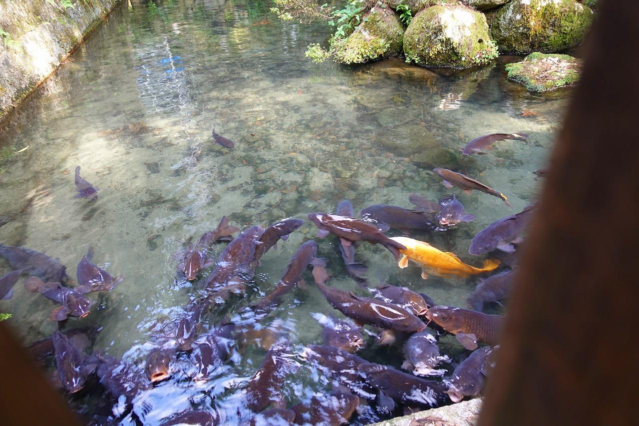 枚岡神社の動物