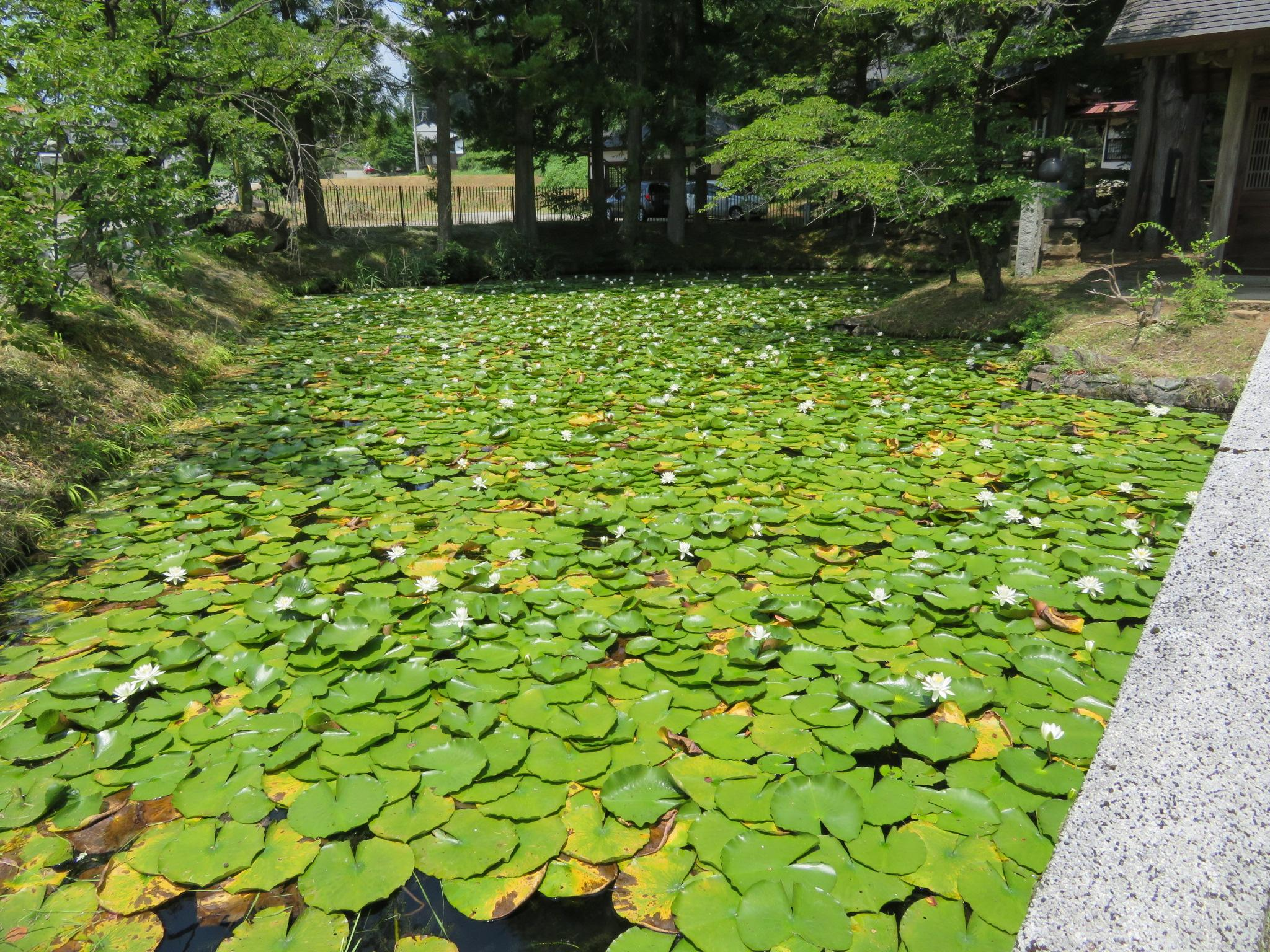穂見諏訪十五所神社の庭園(山梨県長坂駅)