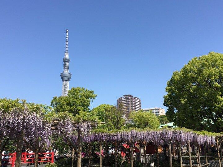 亀戸天神社の庭園(東京都亀戸駅)