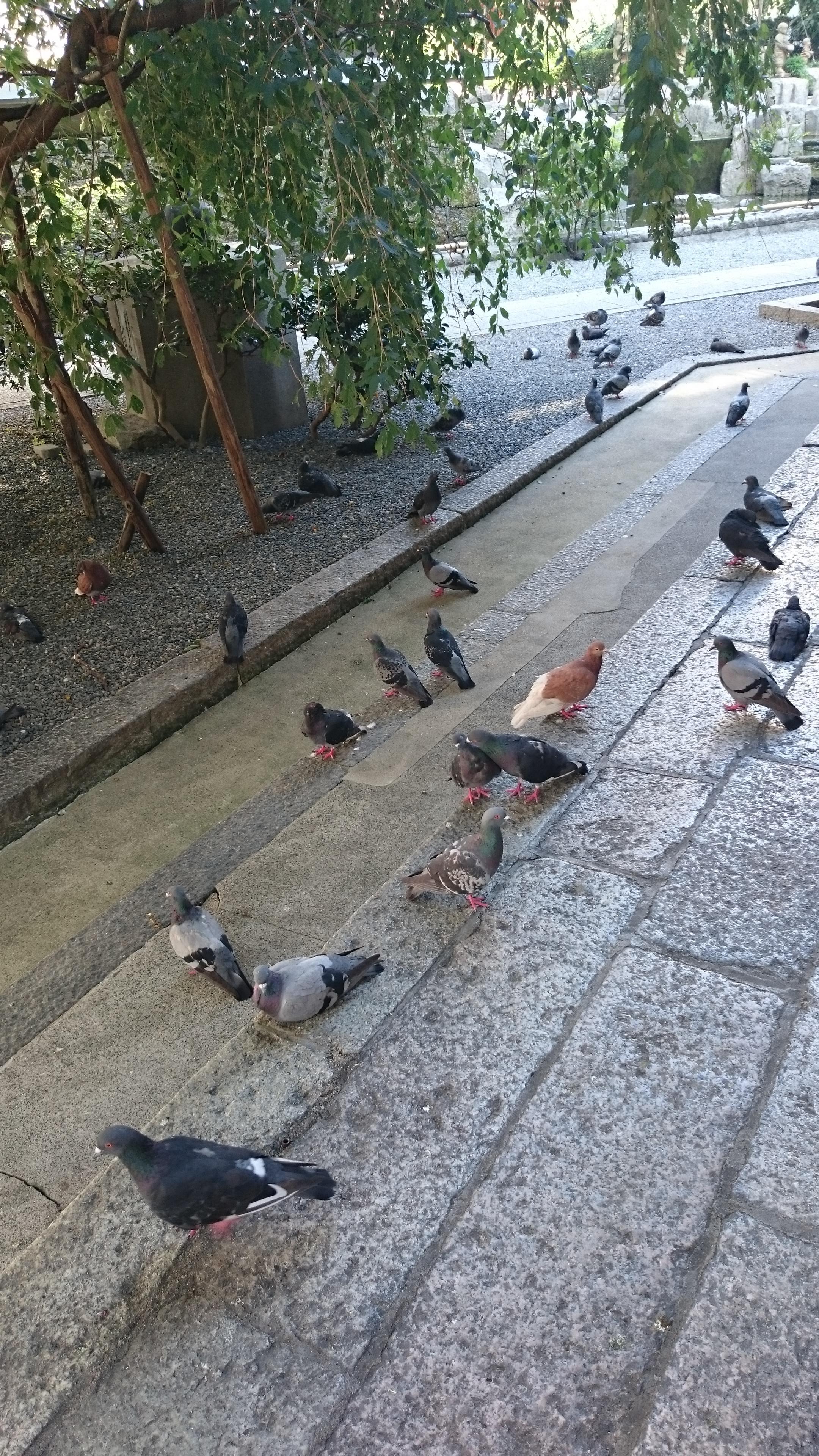 頂法寺(六角堂)の動物(京都府烏丸御池駅)