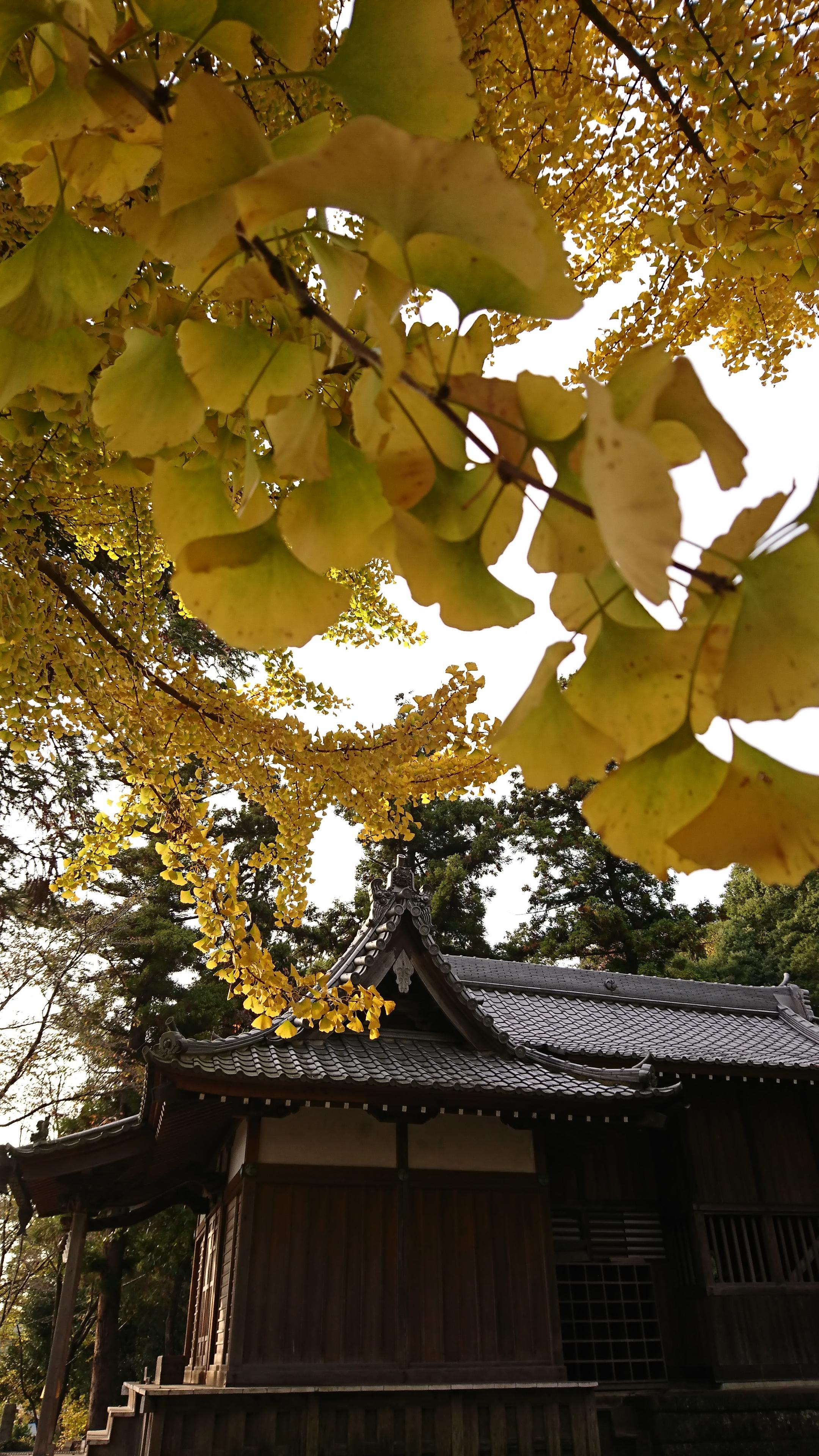 三柱神社の本殿