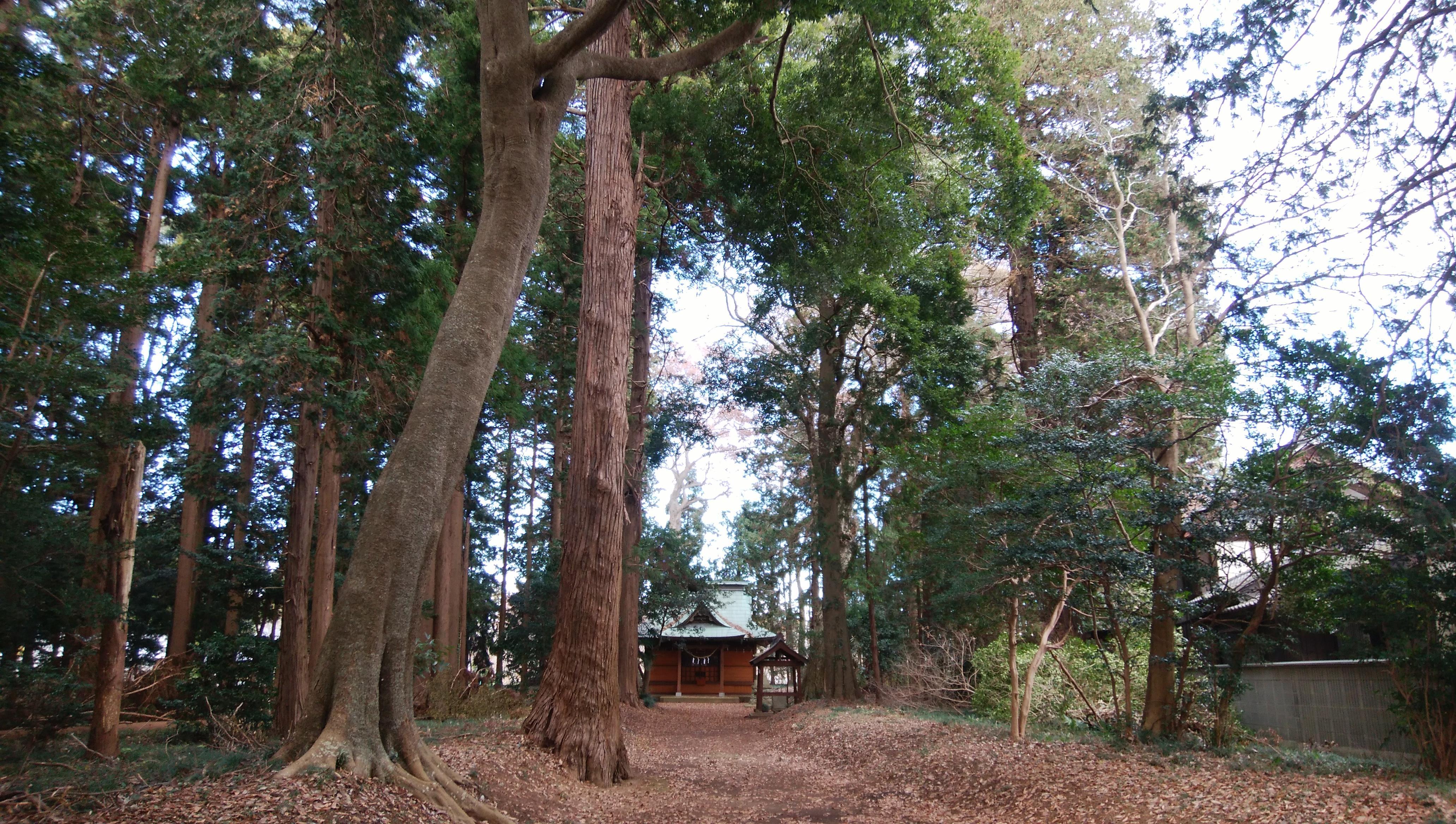 息栖神社の建物その他