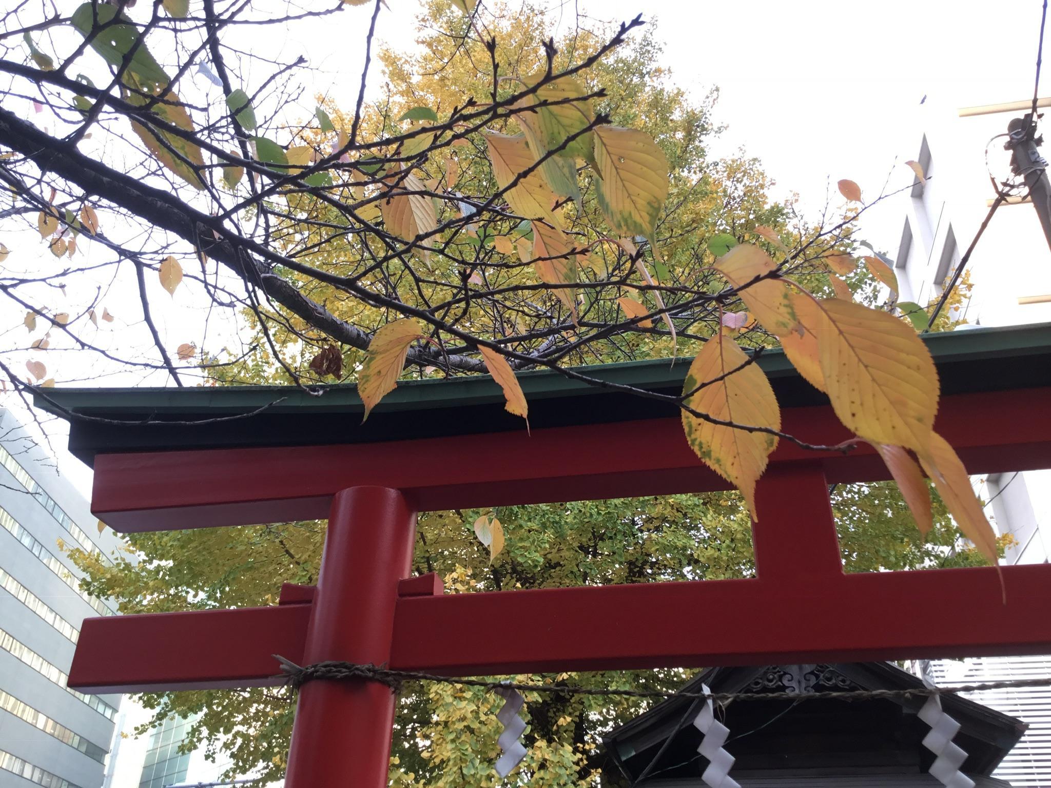 雷電稲荷神社の自然