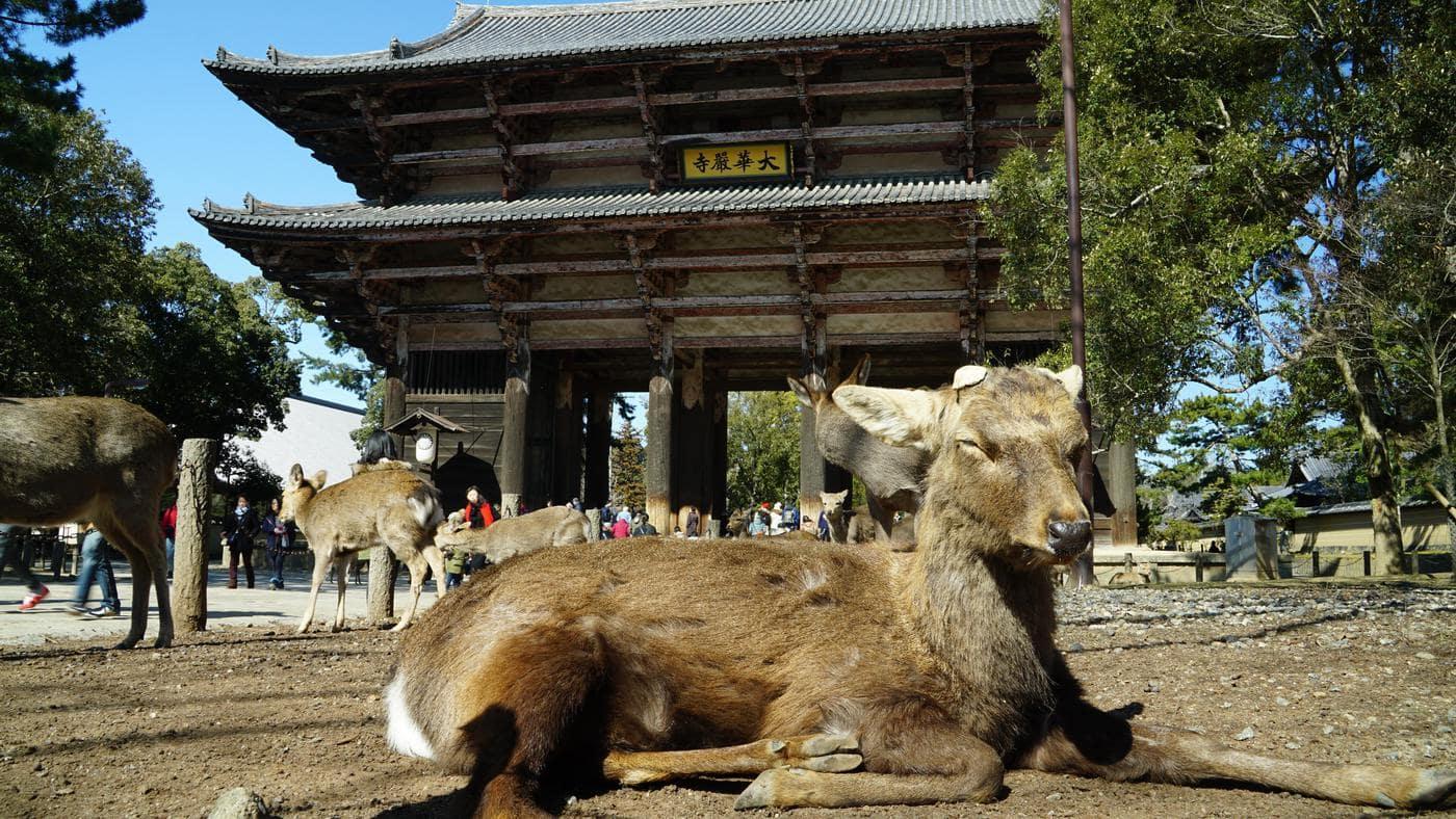 """""""東大寺の鹿"""""""