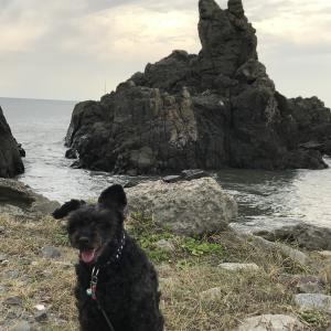 黒犬の鼾さんのプロフィール画像