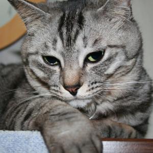 lunaさんのプロフィール画像