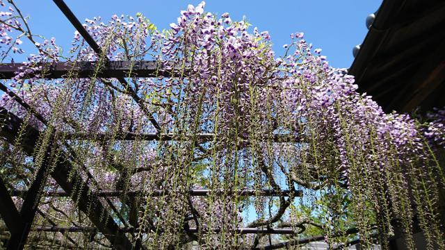 滋賀県正法寺の自然