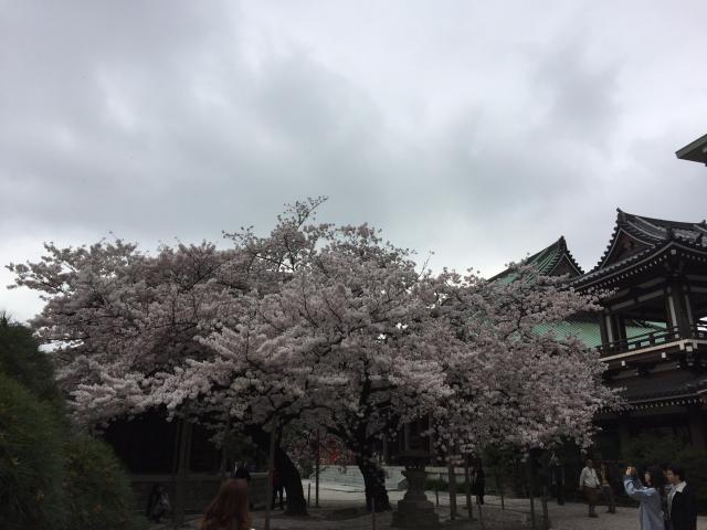 東長寺(福岡県祇園駅) - 自然の写真