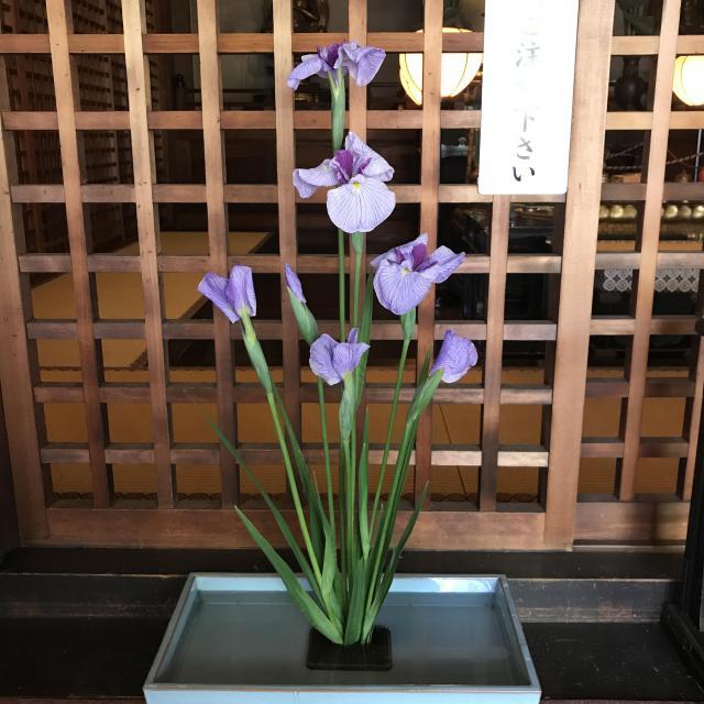 藤次寺(大阪府谷町九丁目駅) - 自然の写真