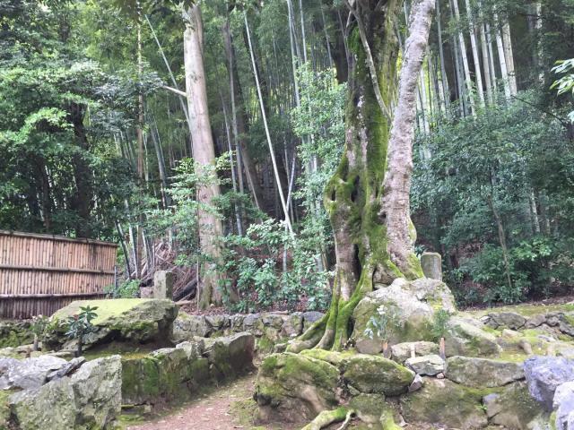 地蔵院の庭園
