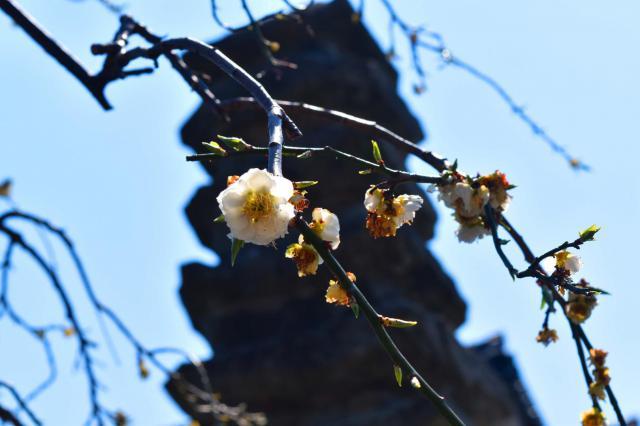 福井県永賞寺の自然