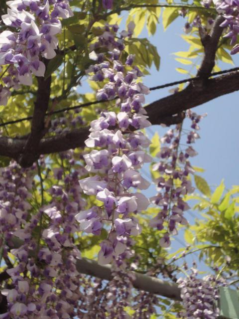 春日神社の自然