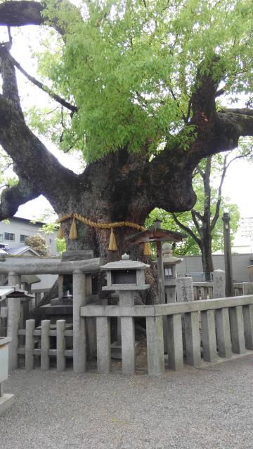 杭全神社の自然