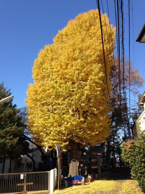 東京都篠塚稲荷神社の自然