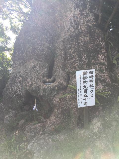 七狩長田貫神社の自然