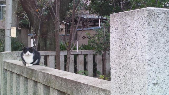 白山神社の動物
