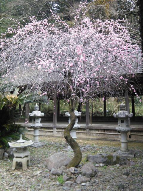 香春神社(福岡県香春駅) - 自然の写真
