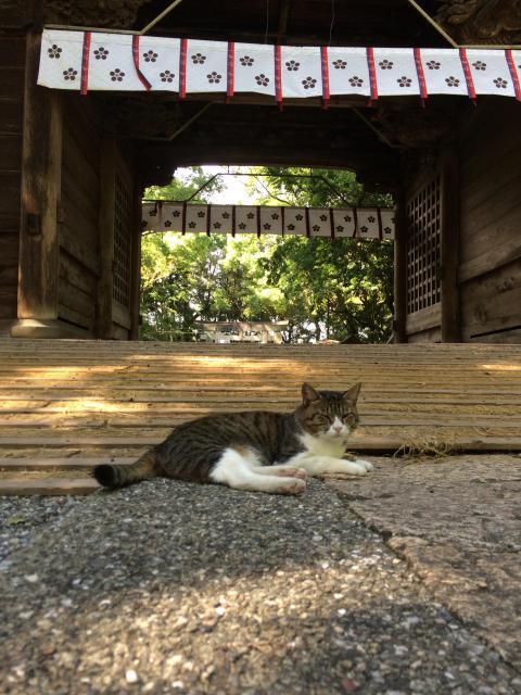 潮江天満宮(高知県高知城前駅) - 山門・神門の写真