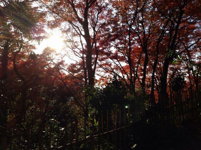 龍尾寺の自然