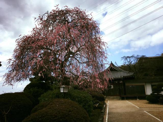 法妙寺の自然