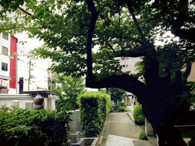 大阪府本傳寺の建物その他