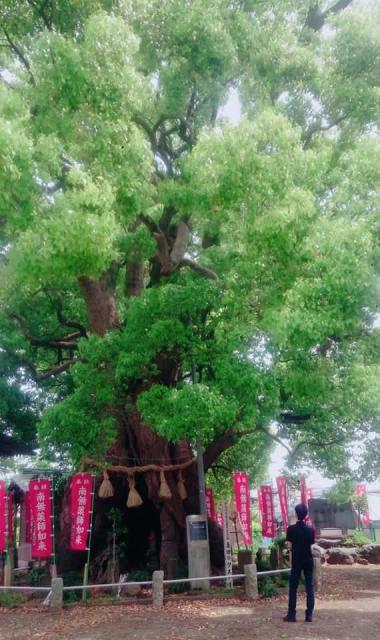 妻田神社の自然