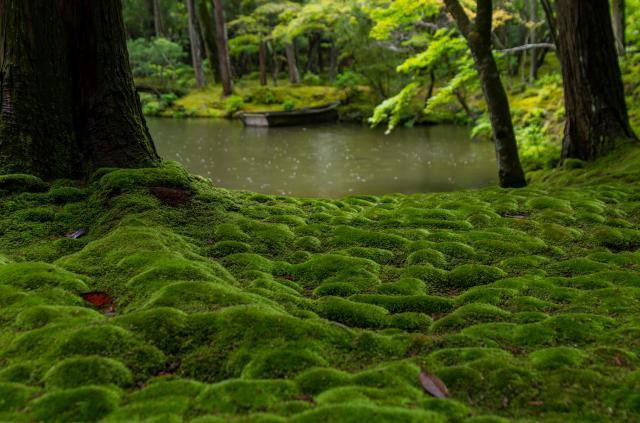 西芳寺の庭園