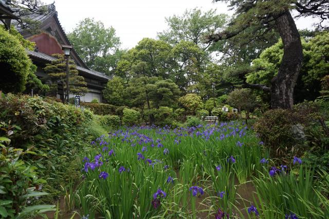 無量寿寺の建物その他