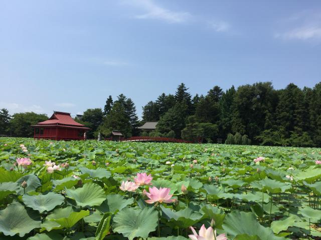 猿賀神社の自然