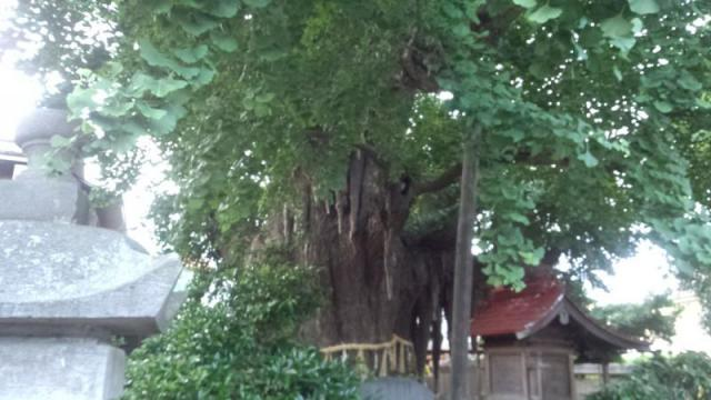 宮城県宮城野八幡神社の自然