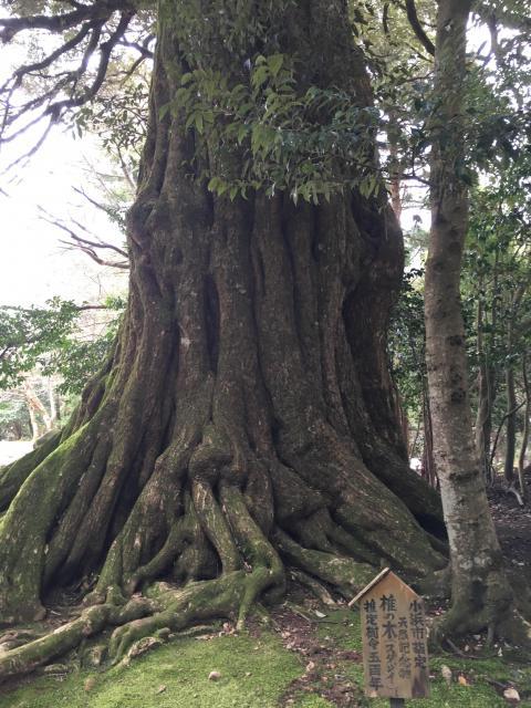 福井県若狭神宮寺の自然