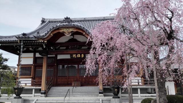 埼玉県多福院の建物その他