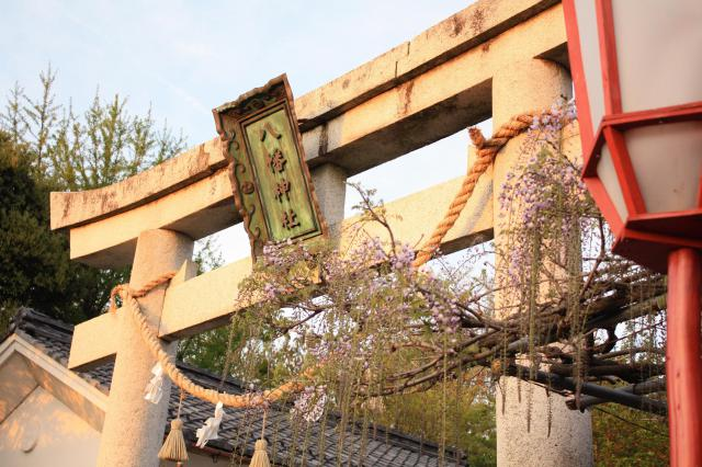 在士八幡神社の鳥居