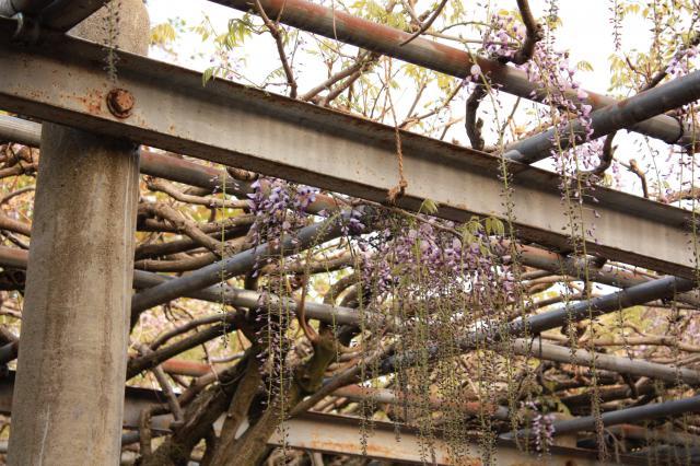 在士八幡神社の自然