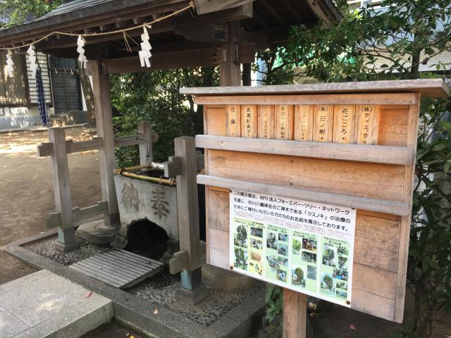 八幡神社(千葉県市川真間駅) - 手水舎の写真
