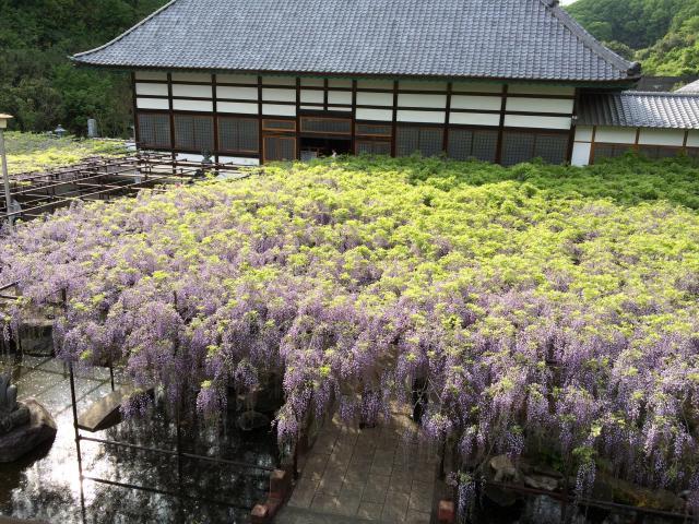 長泉寺の自然