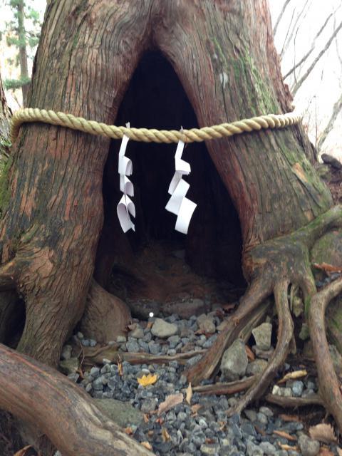 戸隠神社奥社の自然