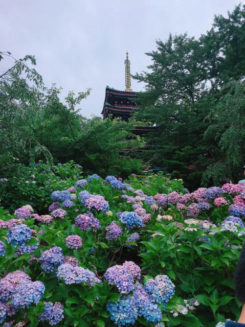 本土寺の自然