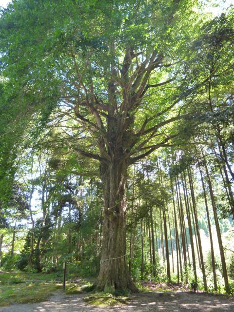 國吉神社の自然