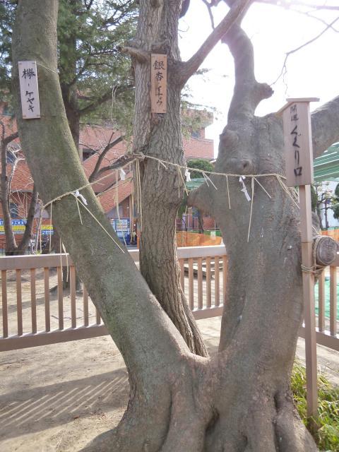 胡録神社の自然