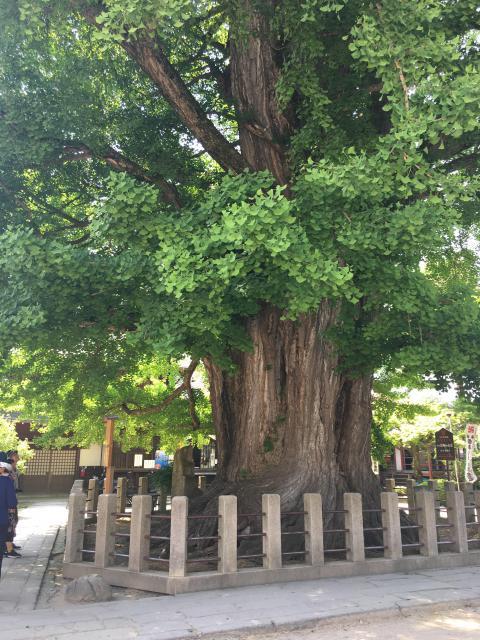岐阜県國分寺の自然