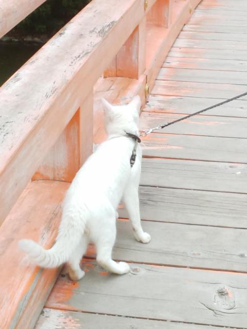 福島県白水阿弥陀堂の写真