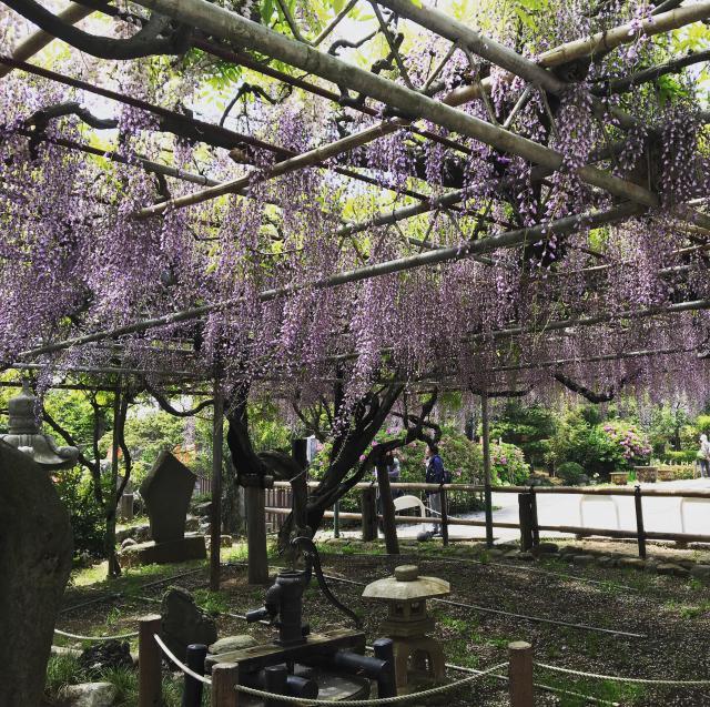 千葉県高圓寺の自然