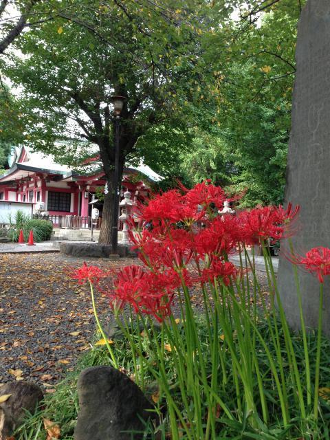 市谷亀岡八幡宮の自然