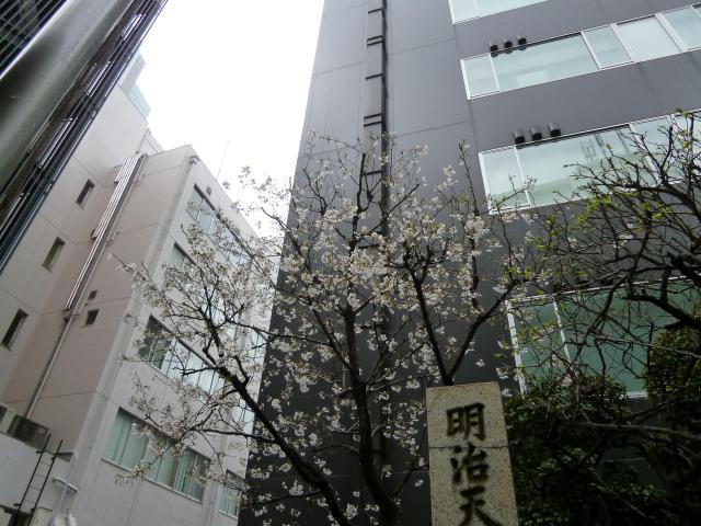 宮益御嶽神社(東京都渋谷駅) - 自然の写真