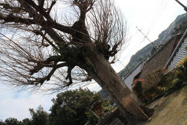 京都府放生院の自然